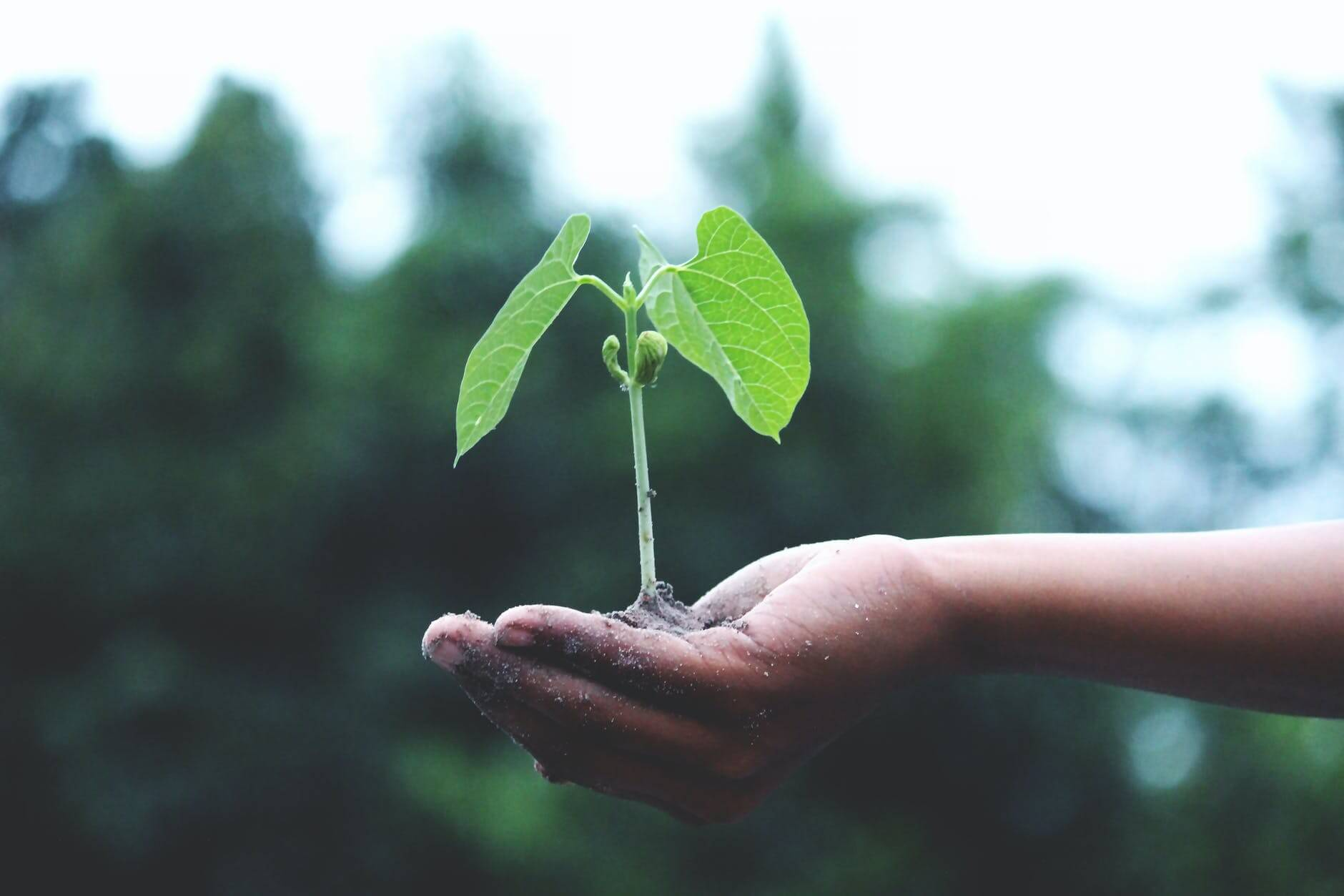 Indul a Virgo Ventures Startup Factory Program 2021 – 2023